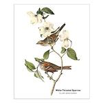 Audubon White-Throated Sparrow Small Poster