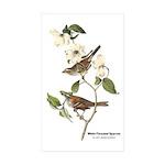 Audubon White-Throated Sparrow Rectangle Sticker