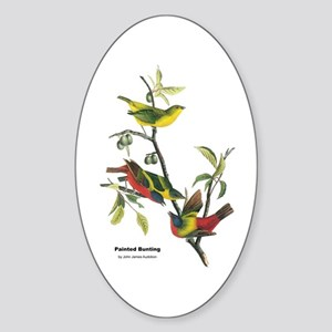Audubon Painted Bunting Bird Oval Sticker