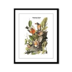 Audubon American Robin Birds Framed Panel Print