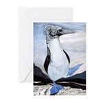 Blue-footed Booby Greeting Cards (Pk of 10)