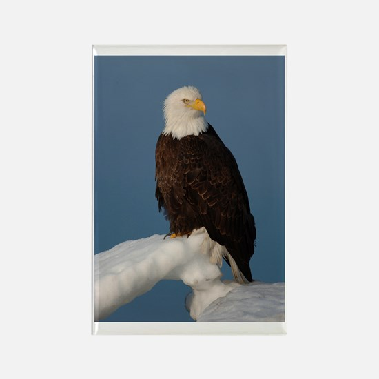Winters Eagle Rectangle Magnet