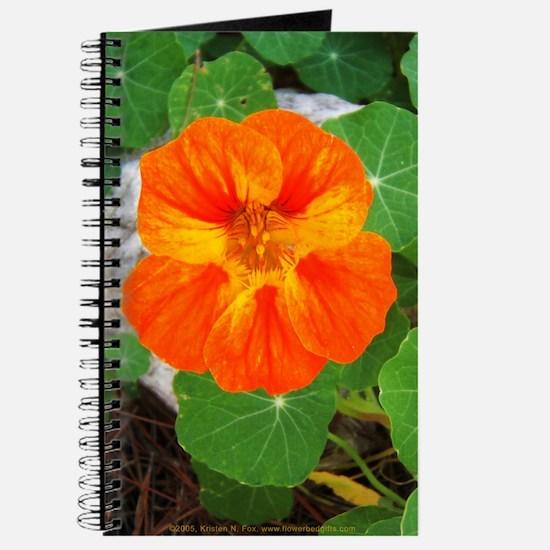 Orange Nasturtium Journal