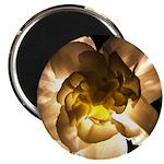 White Carnation Magnet
