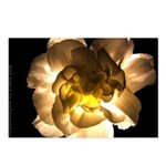 White Carnation Postcards (Package of 8)