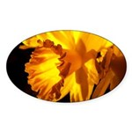 Yellow Daffodil Oval Sticker