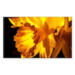 Yellow Daffodil Rectangle Sticker
