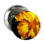 Yellow Daffodil 2.25