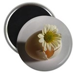 Hatching Daisy Magnet