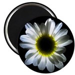 Daisy Flower Magnet