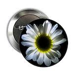 Daisy Flower 2.25