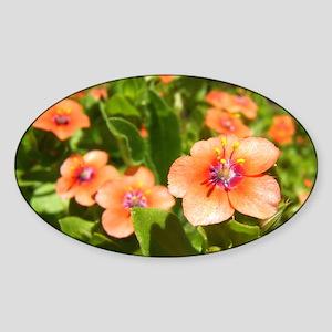 Scarlet Pimpernel Oval Sticker