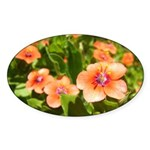 Scarlet Pimpernel Oval Sticker