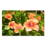 Scarlet Pimpernel Rectangle Sticker