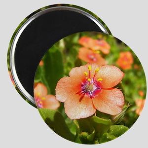 Scarlet Pimpernel Magnet