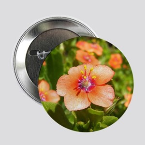 Scarlet Pimpernel Button