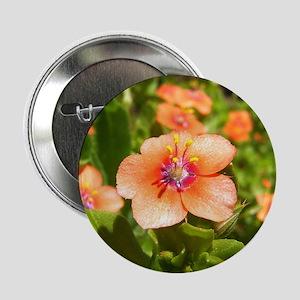 Scarlet Pimpernel Button