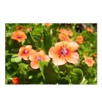 Scarlet Pimpernel Postcards (Package of 8)