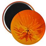 California Poppy Magnet