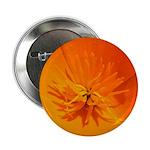 California Poppy Button