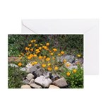 California Poppies Greeting Cards (Pk of 10)
