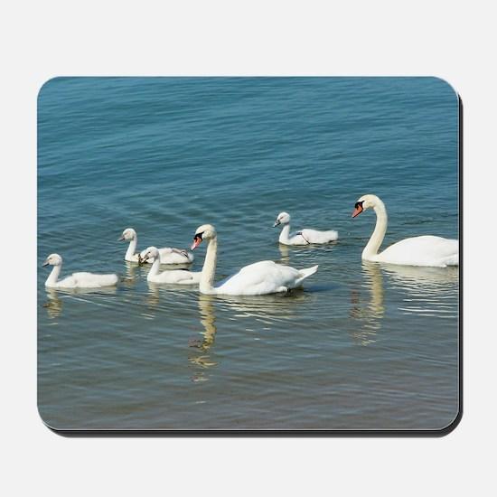 Swan Family Mousepad