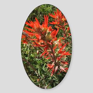 Indian Paintbrush Flower Oval Sticker