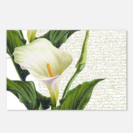 Beautiful Calla Lilies Postcards (Package of 8)