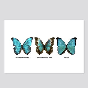 Tropical Butterfly trio #2, 8 Postcards