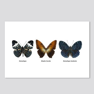 Tropical Butterfly trio #5, 8 Postcards
