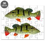Speckled Pavon Puzzle