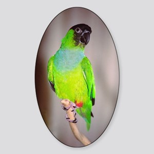 Nanday Conure Oval Sticker