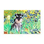 Irises / Miniature Schnauzer Mini Poster Print
