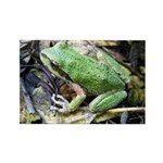 Pacific Chorus Frog Treefrog Rectangle Magnet (100