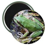 Pacific Chorus Frog Treefrog Magnet