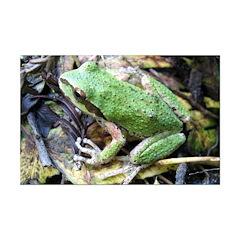 Pacific Chorus Frog Treefrog Posters