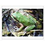 Pacific Chorus Frog Treefrog Small Poster
