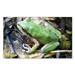 Pacific Chorus Frog Treefrog Rectangle Sticker