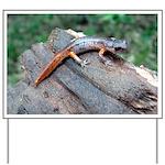 Ensatina Salamander Yard Sign