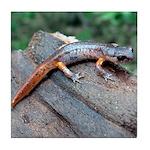 Ensatina Salamander Tile Coaster