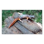 Ensatina Salamander Rectangle Sticker