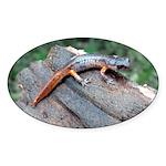 Ensatina Salamander Oval Sticker (10 pk)