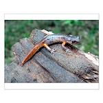 Ensatina Salamander Small Poster