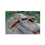 Ensatina Salamander Rectangle Magnet (10 pack)