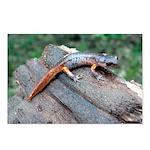Ensatina Salamander Postcards (Package of 8)