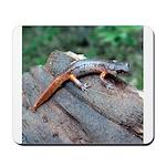 Ensatina Salamander Mousepad