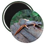 Ensatina Salamander Magnet