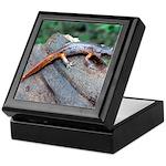 Ensatina Salamander Keepsake Box