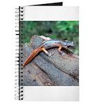 Ensatina Salamander Journal