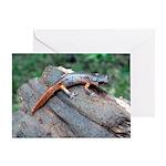 Ensatina Salamander Greeting Card
